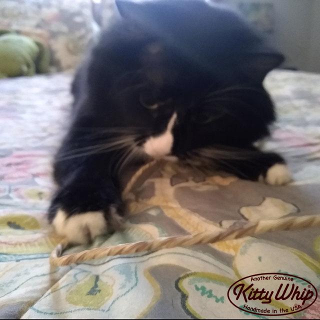 KittyWhip Kitties